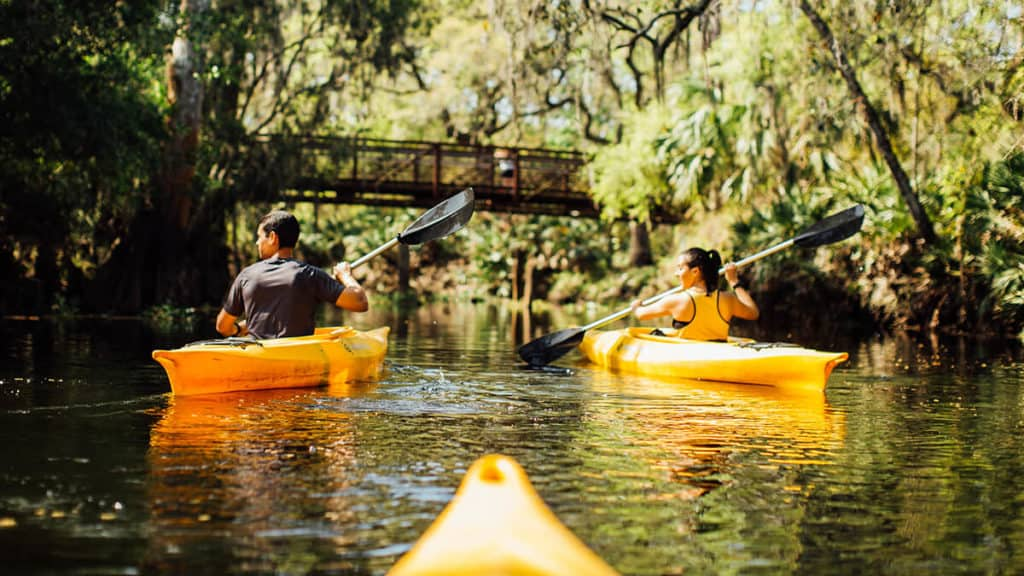 Contact us image: a kayakers-eye view of two kayaks ahead of the viewer, padding in a Florida river.